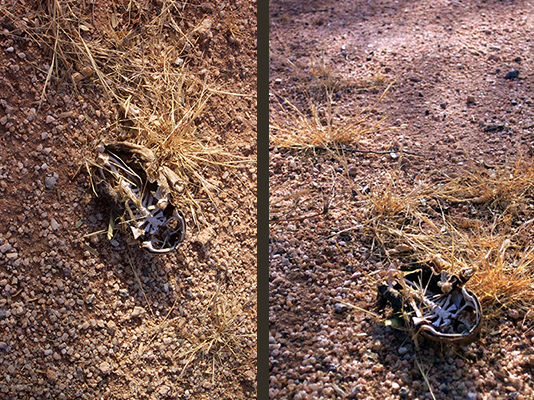 "On the left: ""Blah, look, a dead frog on the ground."" On the right: ""A bleached carcass in an endless wasteland."" So much more dramatic!"