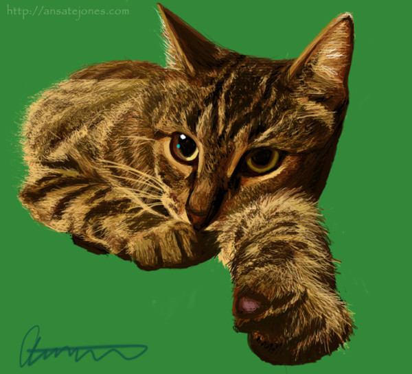 Fiona, one of my kitties. Reference photo by April Burton/Ansate Jones.